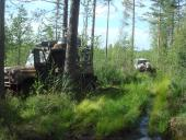 мягкий лес